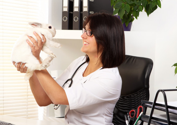 Guide to Selling a Veterinary Practice